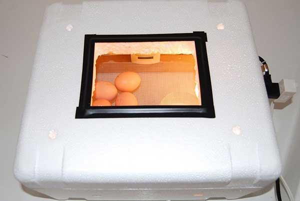 آماده سازی دستگاه ساخته شده برای جوجه کشی