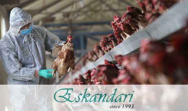 بیماری آنفولانزا در پرندگان خانگی