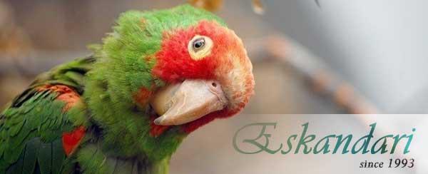 علائم بیماری تنفسی در پرندگان