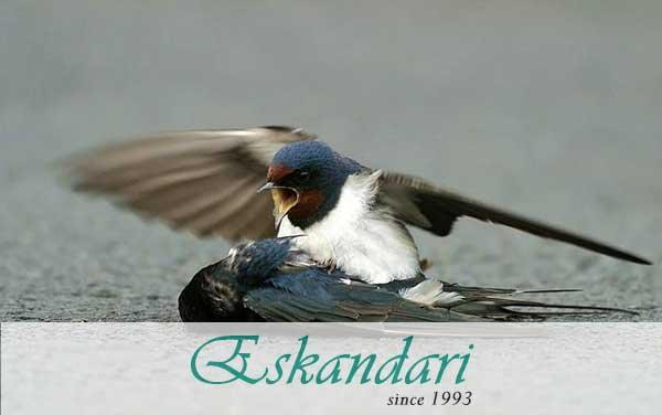 علائم مرگ ناگهانی در پرندگان