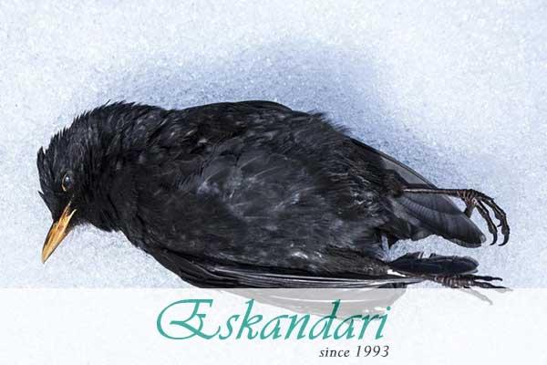 علت مرگ ناگهانی پرندگان زینتی