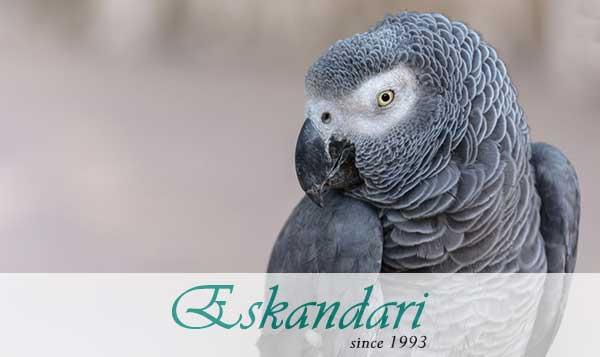 درمان نوک زدن به پر در پرندگان