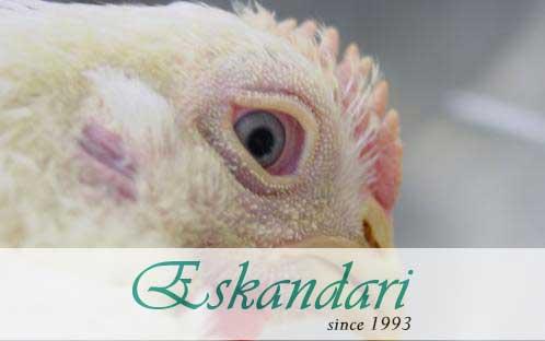 بیماری پارامیکسو ویروس در پرندگان