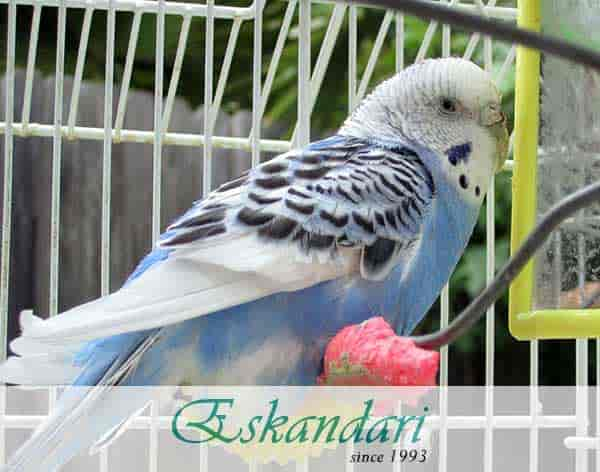 تشخیص تومور در پرندگان خانگی