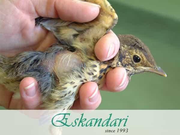سلامت پوست و پر پرندگان زینتی