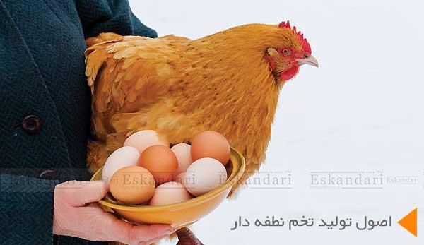 اصول تولید تخم نطفه دار