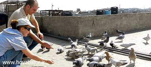 کبوتر بازی در ایران