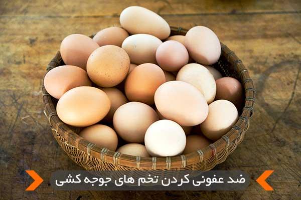 ضد عفونی کردن تخم های جوجه کشی