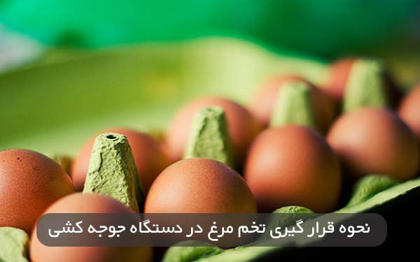 نحوه قرار گیری تخم مرغ در دستگاه جوجه کشی