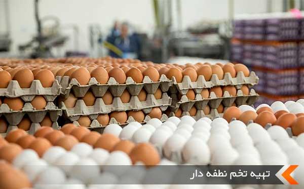 تهیه تخم نطفه دار