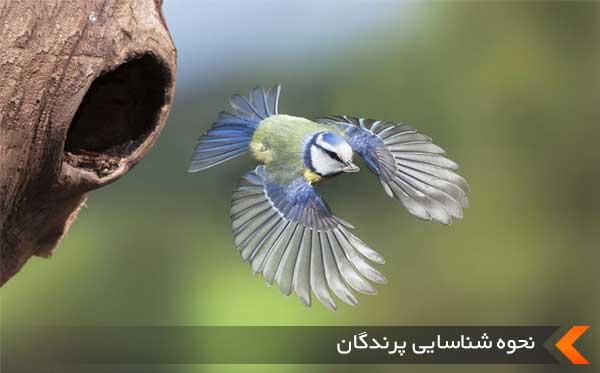 نحوه شناسایی پرندگان