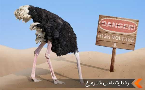 رفتارشناسی شترمرغ