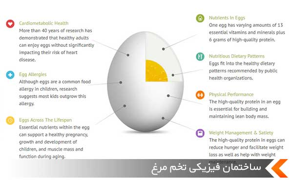 ساختمان فیزیکی تخم مرغ