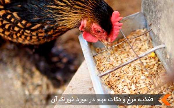 تغذیه مرغ
