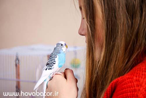 رفتار شناسی مرغ عشق