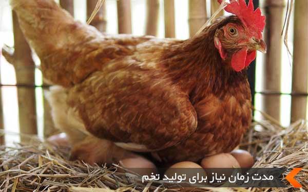 مدت زمان نیاز برای تولید تخم