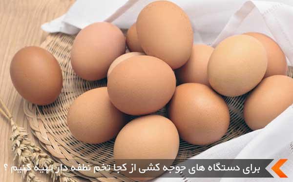 برای دستگاه های جوجه کشی از کجا تخم نطفه دار تهیه کنیم ؟