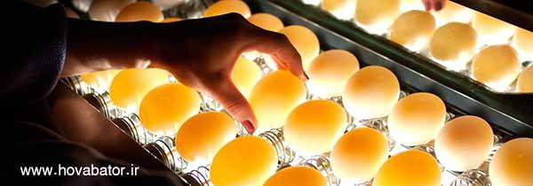 تشخیص تخم نطفه دار
