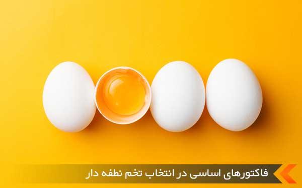 فاکتورهای اساسی در انتخاب تخم نطفه دار