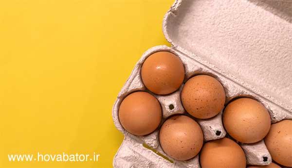 میزان تولید تخم مرغ