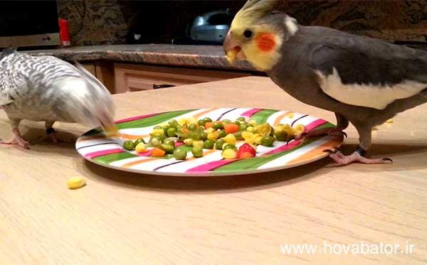 سبزیجات و میوه های مورد علاقه عروس هلندی