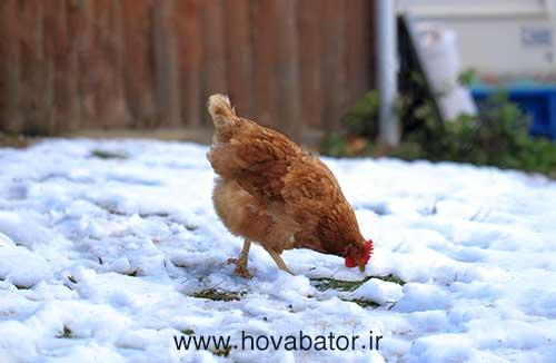 فصل مناسب برای تخم گذاری پرندگان