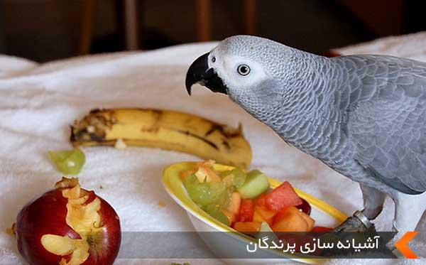 تغذیه کاسکو و غذاهای مورد علاقه آنها
