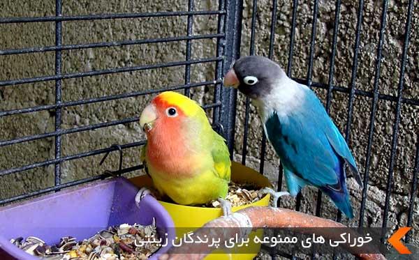 خوراکی های ممنوعه برای پرندگان زینتی