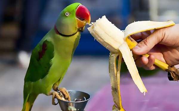 سبزیجات مضر برای پرندگان زینتی