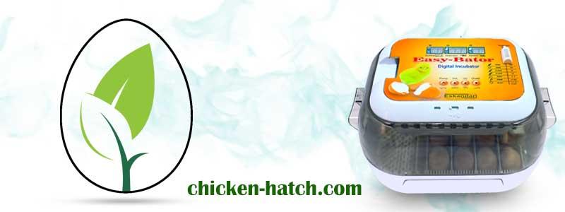 دستگاه جوجه کشی از پرندگان زینتی در خانه